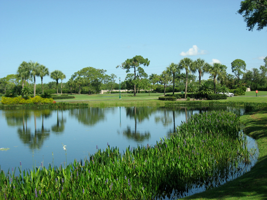 About Naples FL Golf Photo