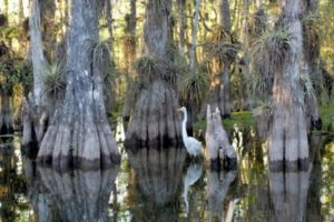 Greater Naples Parks - Big Cypress National Preserve