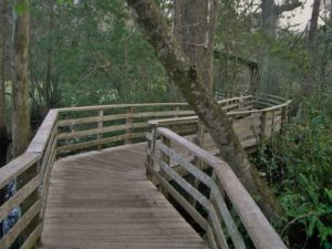 Corkscrew Swamp Sanctuary Boardwalk